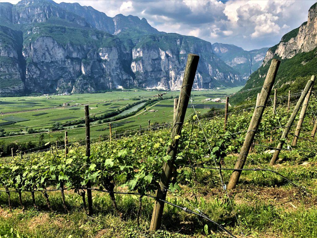 Weingut Endrizzi von oben